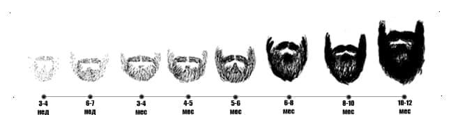 От щетины к 18-ти месячной бороде